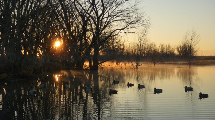 Early Morning Sunrise on the Decoys
