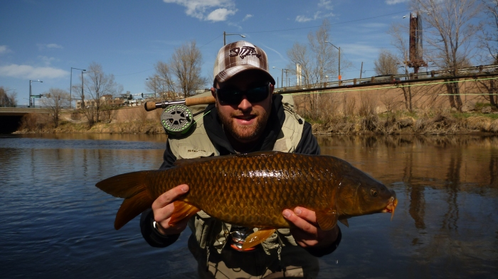 A nice Carp took a custom tied fly